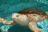 turtle-tot