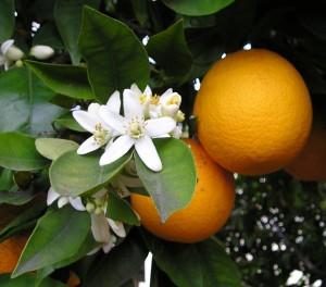 ws_logo_OrangeBlossom1