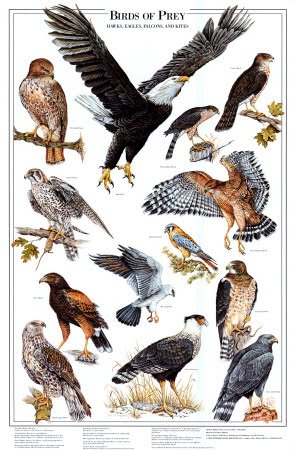birds-of-prey-i1
