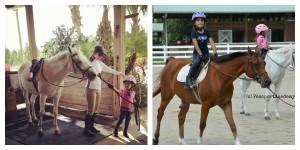 collage pony